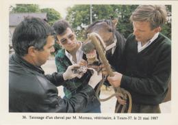 Métiers - Vétérinaire Cheval - Tatouage - Tours 37 - Photographe Jean Bourgeois - Mestieri