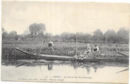AMIENS: LA CULTURE DES HORTILLONNAGES - Amiens