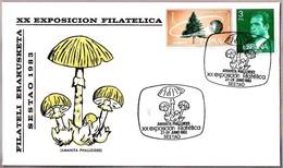 Seta AMANITA PHALLOIDES - Mushroom. Sestao, Pais Vasco, 1983 - Hongos