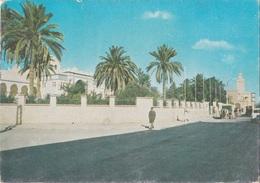Algeria - Le Sud - BISKRA - Biskra