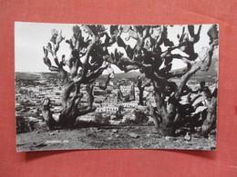 Zacajccas Mexico    Ref 3781 - Mexique