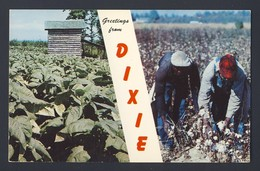 Tobacco, Cotton - Greetings From Dixie - Tabaco