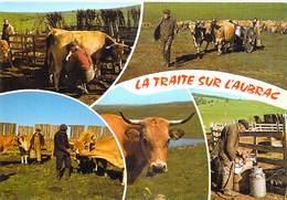 AGRICULTURE Métiers Métier Paysans La TRAITE Sur L'Aubrac (élevage Vache Vaches Cow Cows) *PRIX FIXE - Elevage