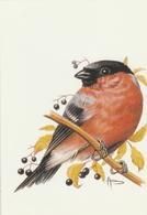 61. BUZIN.  LE BOUVREUIL - 1985-.. Vogels (Buzin)