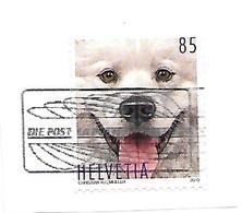 2019: Tierfreunde - Hund - Gebraucht