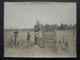VIETNAM SAIGON Photo C. 1880 Battage Du Paddy Enfants Indochine Photographie XIX 19e Indochina Viet Nam Asia Asie - Photos