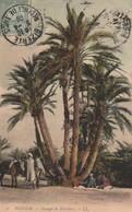 TOZEUR. - Groupe De Palmiers - Tunisie