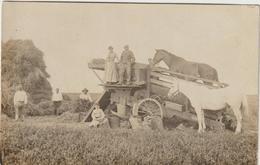 CPA CARTE PHOTO DEPIQUETAGE  A LA TREPINEUSE TRES BEAU PLAN  BOURGEAUVILLE 14 ? - Tracteurs