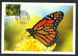 Portugal Madère Carte Maximum Timbre Personnalisé Papillon Iles Selvagens 2013 Personalized Stamp Maxicard Butterfly - Butterflies