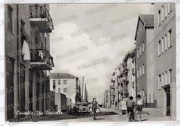CINISELLO - Animata - Cinisello Balsamo - Milano - Cinisello Balsamo