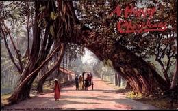 Artiste Cp Kandy Ceylon Sri Lanka, Banyan Tree Arch Near Colombo, Tuck Series II No 7482 - Sri Lanka (Ceylon)