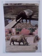 Tapir рostсard Rhino саrte Postаle Zoo - Rhinoceros