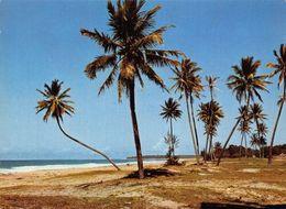 Madagascar Tahiti Kely Tamatave Palm Trees Postcard - Madagascar