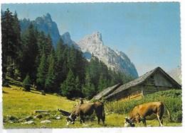 -LA CHAPELLE D'ABONDANCE C/Abondance - Chevenne Et Le Mont Chauffé - Vaches - La Chapelle-d'Abondance