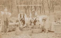 EVESHAM Washing Onions RP  Wo23 - Worcestershire