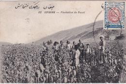 CPA Iran - Perse - Isfahan - Plantation De Pavot - 1910 - Iran