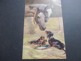 Teckel, Dachshund, Dackel, - Honden