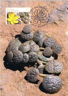 35044. Tarjeta Maxima BOTANY (Australia) 2019. Cactus, Portulaca Cyclophilla - Cactus