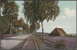 Motiv Bei Garlstorf, Lüneberger Heide, C.1910s - Kumm Gebrüder AK - Lüneburger Heide
