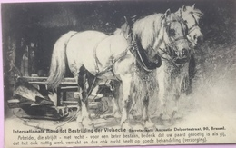 (2405) Brussel - Internationale Bond Tot Bestrijding Der Vivisectie - Witte Paarden - Institutions Internationales