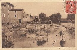54 / Nomeny : La Seille Troupeau De Moutons       ///   DEC. 19 ///   BO.54 - Nomeny