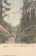 Wavre ,  Bois De La Pierre ,( Ravin Des Loups , Nels , Série 79 N° 33 , Colorisée ) - Wavre