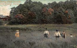 Cutting Sweet Lavender Near Croydon Surrey Postcard - Surrey