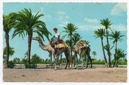 ADEN/YEMEN - CAMELS PASSING TROUGH PALM TREES-LAHEJ / WITH FEDERATION OF SOUTH ARABIA STAMP - 1967 - Yémen
