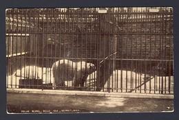 Polar Bears, Zoo - Belle Isle, Detroit, Michigan, USA PU 1910 Detroit Mich. - Ours