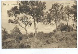 Koksijde Coxyde Les Dunes Boisées - Koksijde
