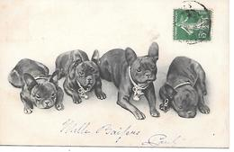 French Bulldog, Bouledogue Français, Französische Bulldogge, Family, Lovely Card - Cani