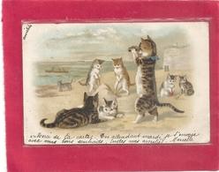 """TRES JOLIE CARTE DE """" FAMILLE CHAT """" AU BORD DE LA PLAGE . DOS NON DIV AFFR LE 1-1-1903 . 2 SCANES - Katten"""