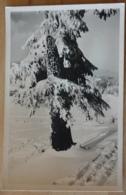 Nadelbaum Winter Schnee Snow Salzburg Hans Seiser - Bäume