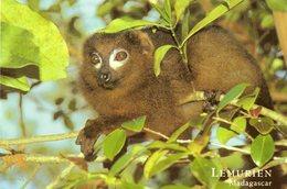 Lemurien   Avec Timbre Au Dos  Voir  2 Scans - Madagascar