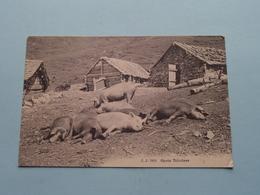 Après Déjeûner - Anno 1911 ( Martigny Suisse ) J.J. 7661 ( Voir / See Photo ) ! - Varkens