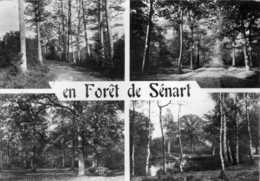 En Forêt De Sénart - Images De France - Les Promenades En Forêt  - Raymon Brunoy - Ile-de-France