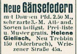 Original-Werbung/ Anzeige 1931 - GÄNSEFEDERN / HELENE GIELISCH -  NEUTREBBIN - Ca. 35 X 25 Mm - Werbung