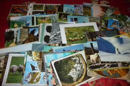 LOT DE 140  CARTES ANIMAUX - 100 - 499 Postcards