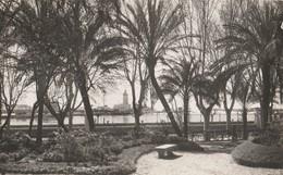 Tarjeta Postal. España. Malaga. Jardines Del Parque. - Árboles