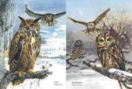 8199  Hibou Grand-duc (Bubo Bubo) + Chouette Hulotte (Strix Aluco): 2 Cpa D'Allemagne -  Eurasian Eagle-owl / Tawny Owl - Vögel