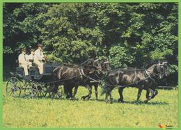 Voyo HORSE CART - KLADRUBER  2000s  Dalibor Gregor MINT Nr VIII-2 - Paarden