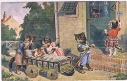 Chats Humanisés  - Cat -  Katze-  Poezen Naar De Dokter - Gatos
