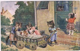Chats Humanisés  - Cat -  Katze-  Poezen Naar De Dokter - Chats