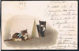 Chats  - Cat -katzen - Poesjes - Katten