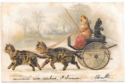 Attelage De Chats Monté Par Des Chats. - Dressed Animals