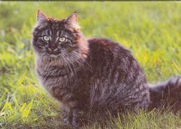 Calendrier De Poche 2000 - Calendriers