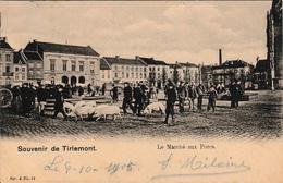Souvenir De Tirlemont Le Marché Aux Porcs Animation 1905 - Tienen