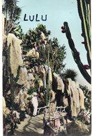 MONACO : édit. Estel ; Jardin Exotique , Yucca Cereus Et Opuntias Divers - Jardin Exotique