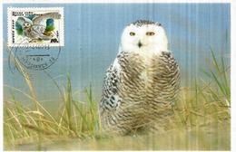 Arctic Owl, Chouette De L'Arctique , Carte-maximum De Russie - Hiboux & Chouettes