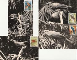 CARTE MAXIMUM (4) - MADAGASCAR - OISEAUX (1963) - Birds
